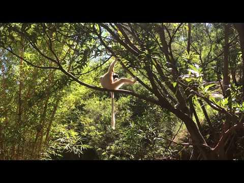Lemur Park and Reserve near Antananarivo Madagascar