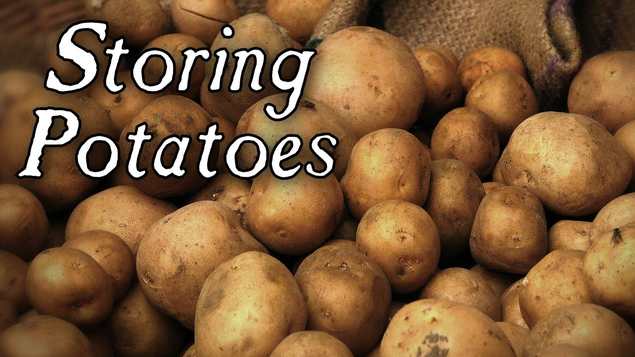 Long Term Potato Storage   Qu0026A