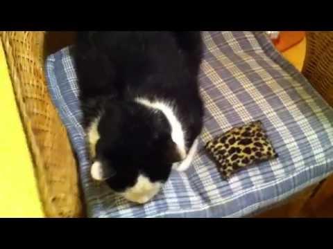 Fellpflege bei Katzen - so geht's