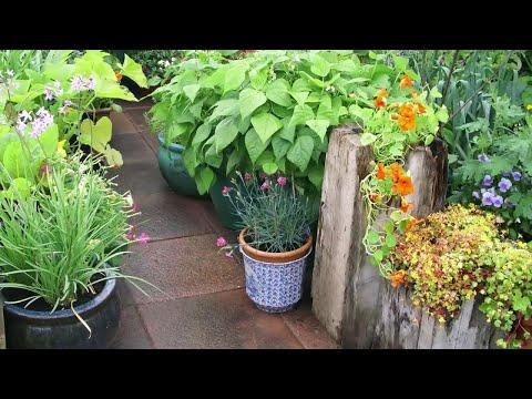 5 Golden Rules of Garden Planning