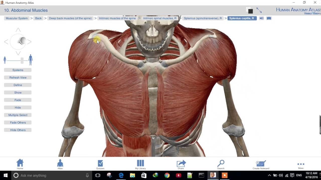 Human Anatomy Atlas App Youtube