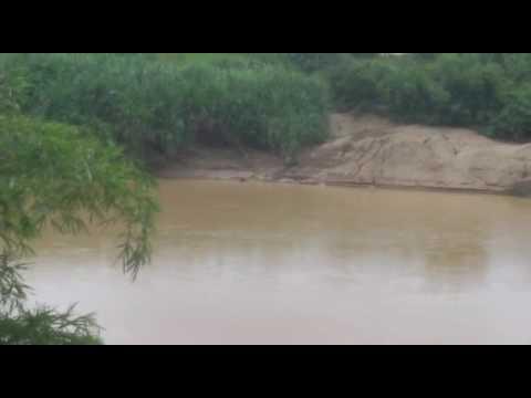 Gempar buaya di sungai pahang kampung kelola jerantut