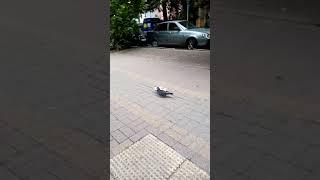 Лазаревское Сочинский большой Сочи Краснодарский край