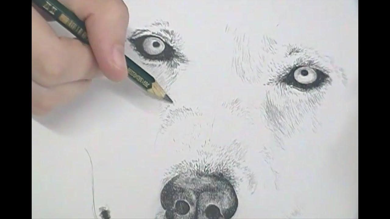 Desenho Do Dia 7 Lobo Youtube