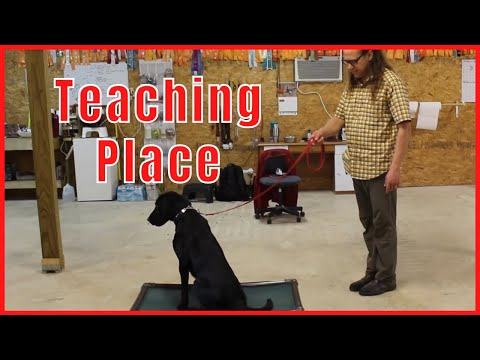 Teaching Place to a nervous, fearful & skittish dog. How To Dog Training