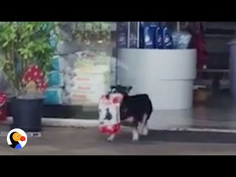 Dog Walks To Pet Store, Brings Treats Home BY HIMSELF | The Dodo