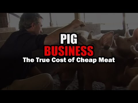 Pig Business in Latvia