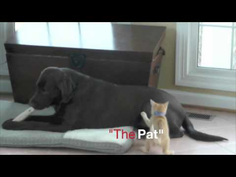 Dog and Kitten meet for the first time