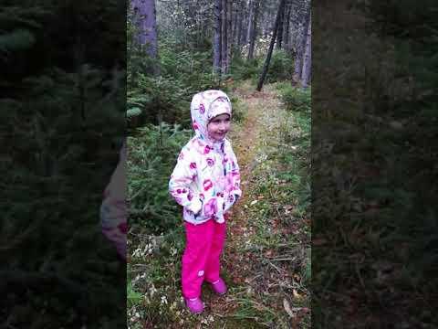 Гуляем в лесу. Ищем белочек и грибы вонючки) - YouTube