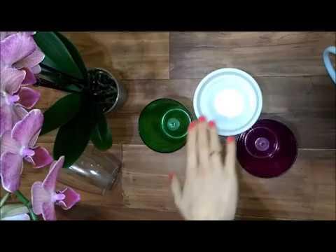 Проблемы с использованием кашпо для орхидей. Белые vs прозрачные и цветные. Какое кашпо нужно орхе?