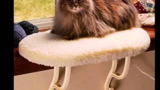 Canadian Pet Essentials.com - Indoor Dog Potty, Cat Products Toronto
