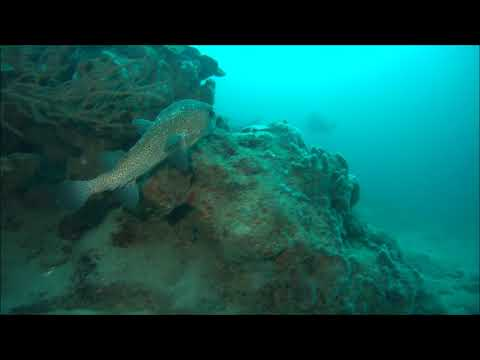 Lighthouse Reef - Grenada - 09-10-17