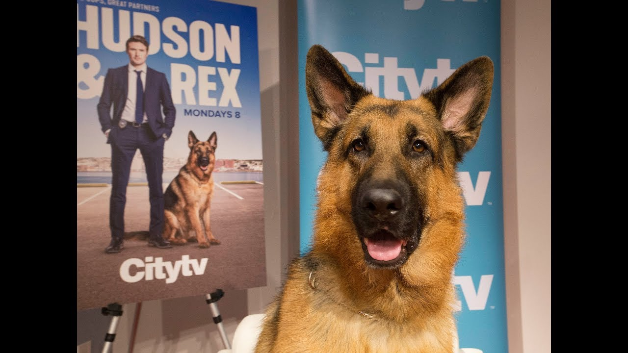 Ancaster dog gets own TV show … and trailer, chef and