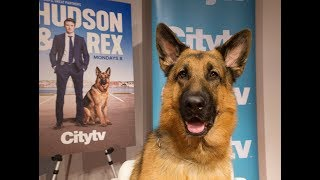 DOG GOES HOLLYWOOD: Ready for his closeup Ancaster pooch stars in TV's Hudson and Rex