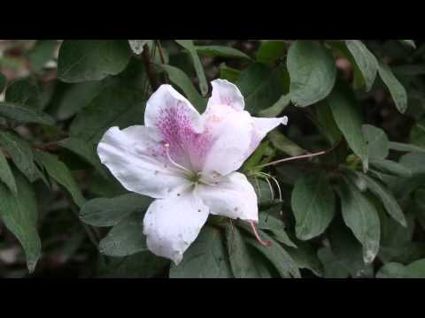 Winter Flowering Plants For Garden And Container