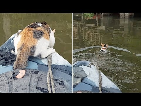 Cat Jumps From Kayak To Go Swimming