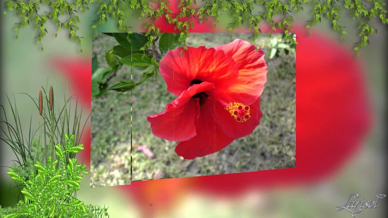 Цветы и бабочки - одно сияние природы - YouTube