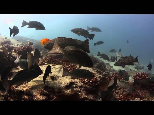 Cabo Pulmo National Marine Park and Cabo Pulmo Beach Resort