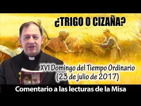 ¿TRIGO O CIZAÑA? - XVI Domingo del Tiempo Ordinario (23 de julio de 2017)