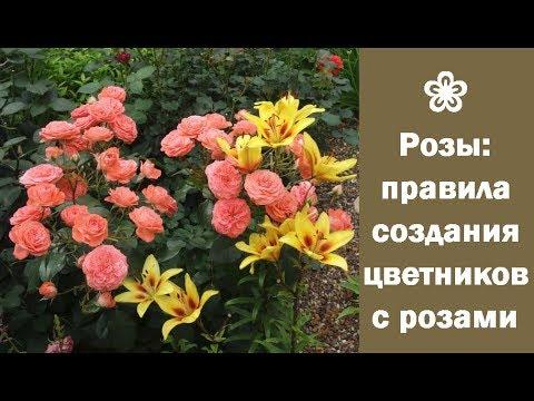 ❀ Розы: правила создания цветников с розами