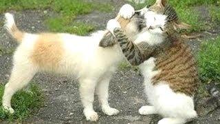 gatos divertidos conociendo a tiernos perritos