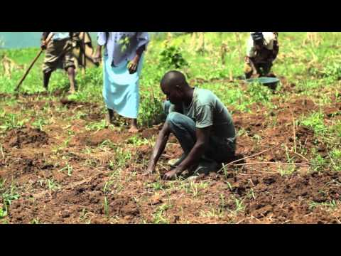 Bujagali Tree Project - Uganda - A Dam Relief