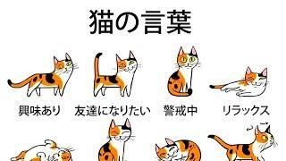 飼い猫の気持ちがもっとよく分かるようになる5つのヒント