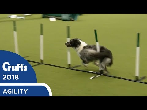 Agility - Championship Round 2 (Agility) Part 1 | Crufts 2018
