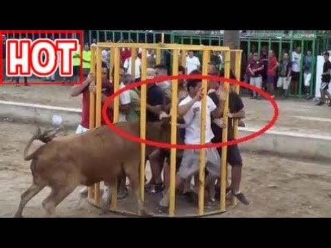 Videos Graciosos 2017: Gente Estúpida Haciendo Cosas Estúpidas - Toro Peleando - Toro Falla Acciden