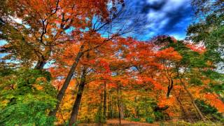 Autumn Is Coming Instrumental Music Relax