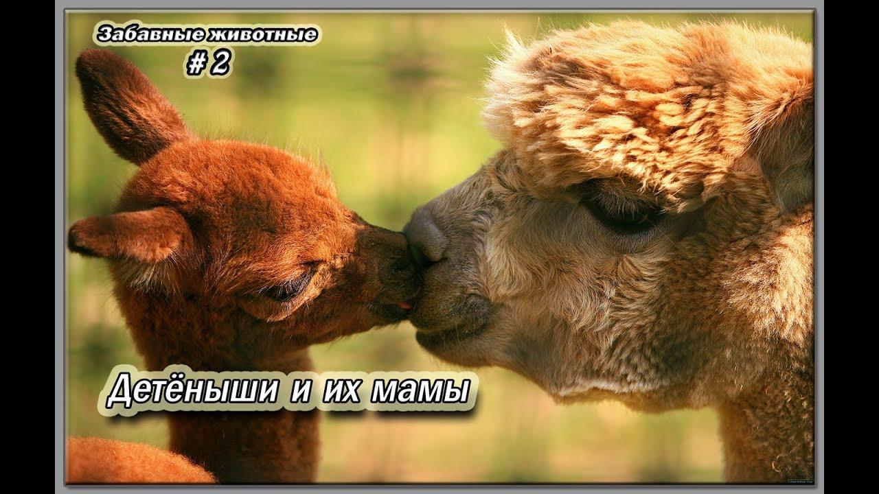 животных мама и детеныш
