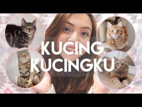 PERKENALAN KUCING - KUCINGKU | MY CATS DIARY #1
