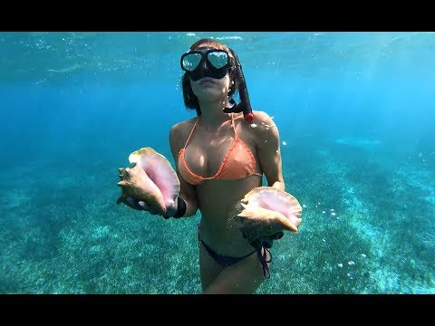 Diving for CONCH in the BAHAMAS
