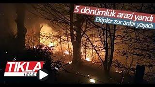 5 dönümlük arazide yangın
