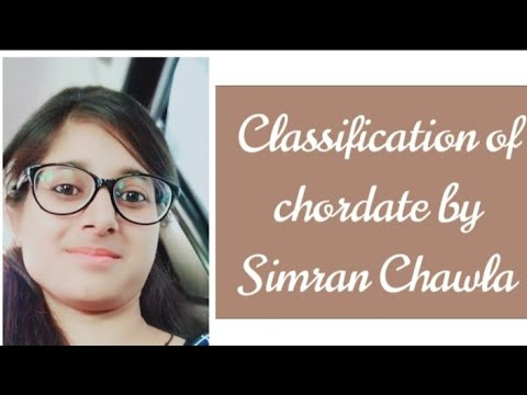 Classification of chordate