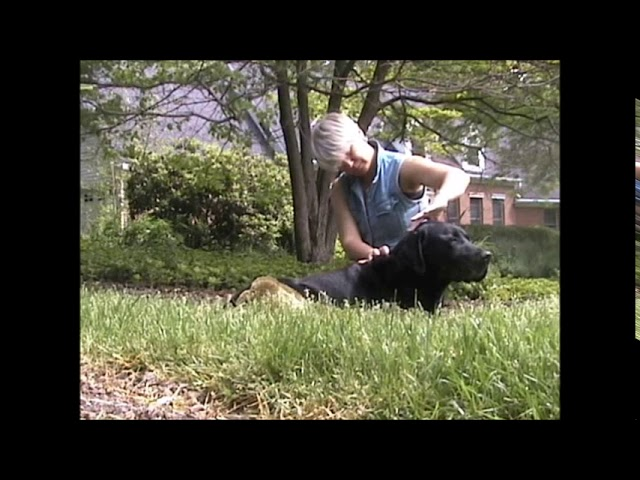 canine massage and accupressure - A Naturally Balanced Dog