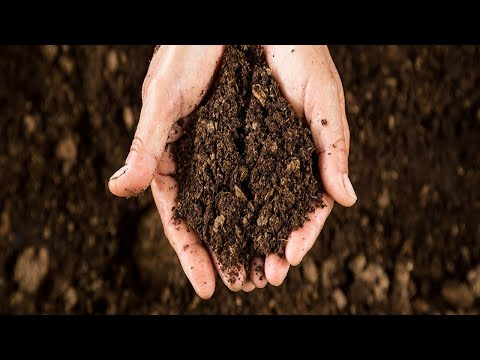 Water Only Organic Super Soil for Autoflower Cannabis