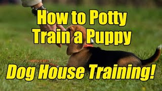 How to Potty Train Your Puppy Dog With Success - Dog House Training Tips!