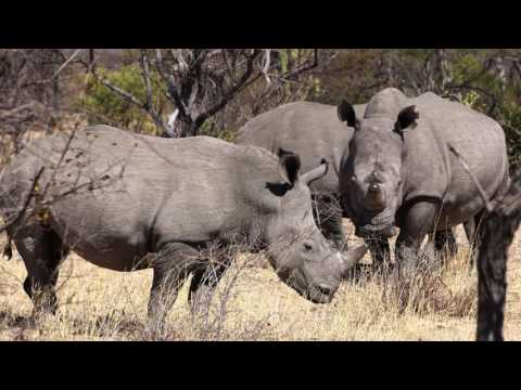 Tracking Rhinos in Matobo National Park Zimbabwe