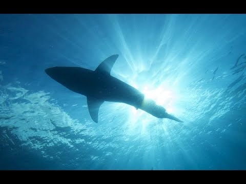 ЧТО СКРЫВАЕТ ОТ НАС КРАСНОЕ МОРЕ. WHAT HIDES FROM US THE RED SEA
