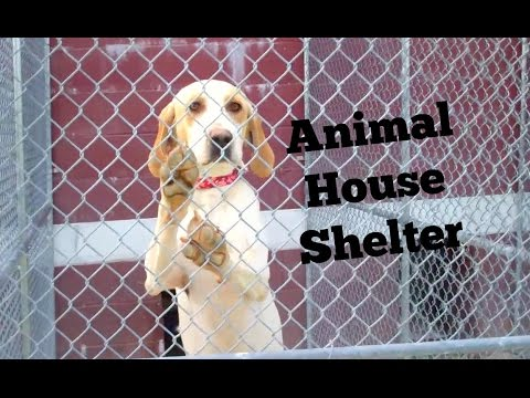 No Kill Shelter For Cats Dogs Animal House Shelter