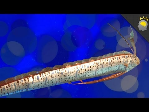 Giant Oarfish, Oh My! - Science On The Web #36