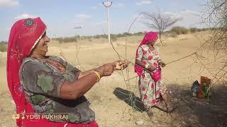 केर के भाव 2000 हजार रुपय किलो रोज 5 किलो केर तोड़ती है || #villagelife #desretlife