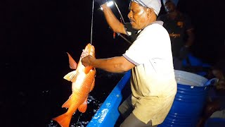 NIGHT FISHING - BACK TO BACK  MANGROVE JACK FISH CAUGHT IN SEA