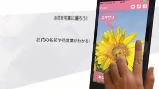 [iPhoneアプリ] FLOWERY - お花の名前や花言葉を調べよう!