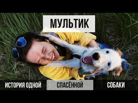 ИСТОРИЯ ОДНОЙ СПАСЕННОЙ С УЛИЦЫ СОБАКИ. ДО СЛЁЗ || VeganFamily || Помощь бездомным животным. Приют