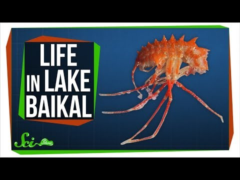 What's at the Bottom of the Deepest Lake in the World?