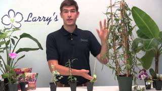 How To Grow Your Own Vanilla - Orchid Growing Guide
