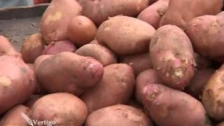 Osnovno djubrenje krompira, preduslov za dobar prinos, Timac Agro - U nasem ataru 423.wmv