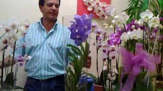 Forma de regar la orquidea Vanda